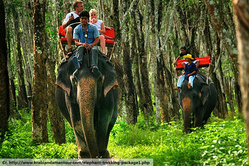 elephant trekking tour