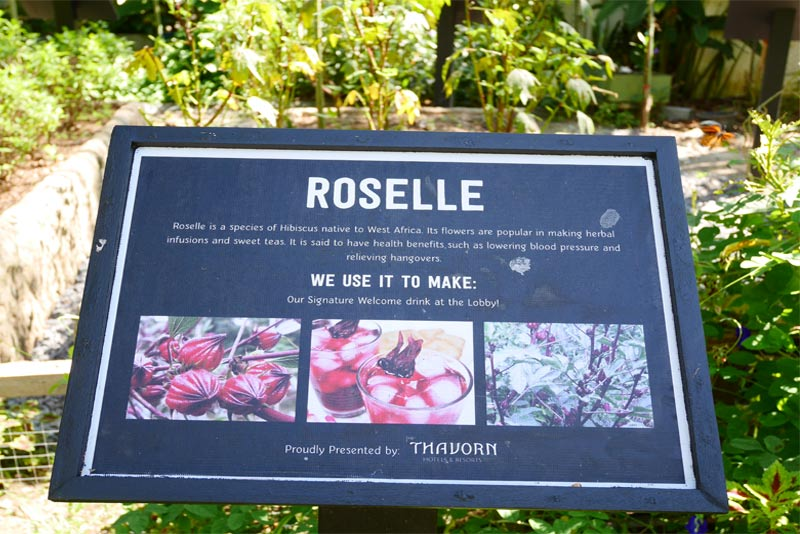 roselle-organic-garden