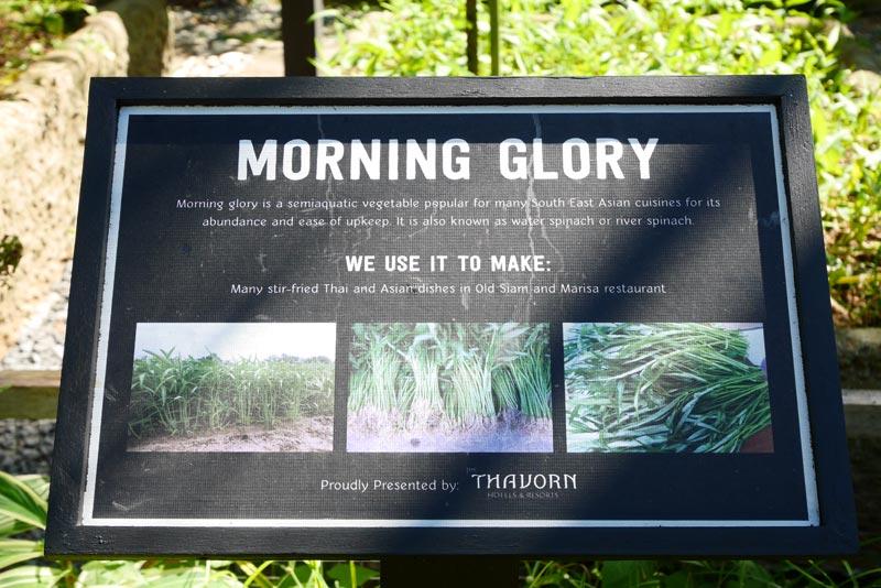 Morning-Glory-Thavorn-Beach-Village