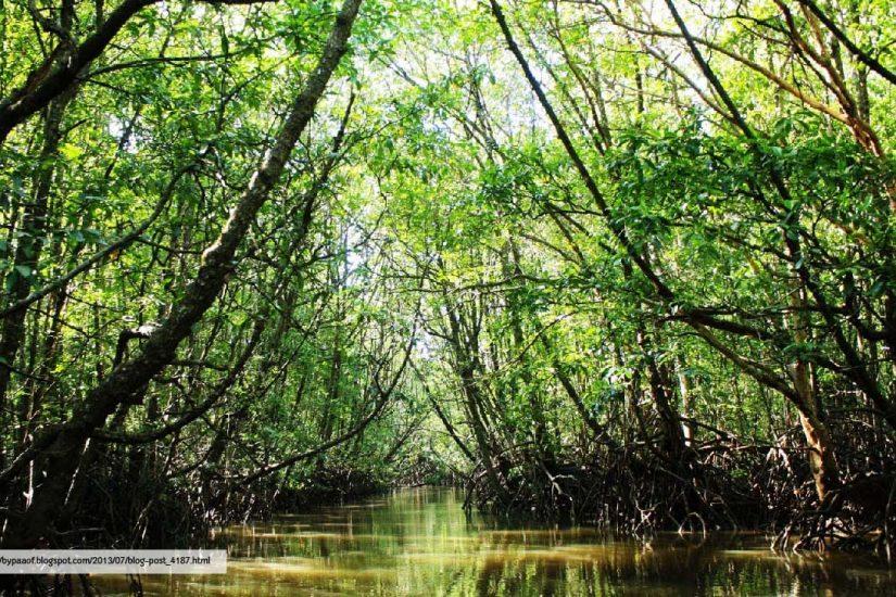 Phuket Ecotourism