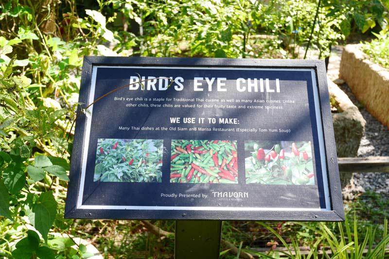 bird's-eye-chili-Thavorn-beach-village